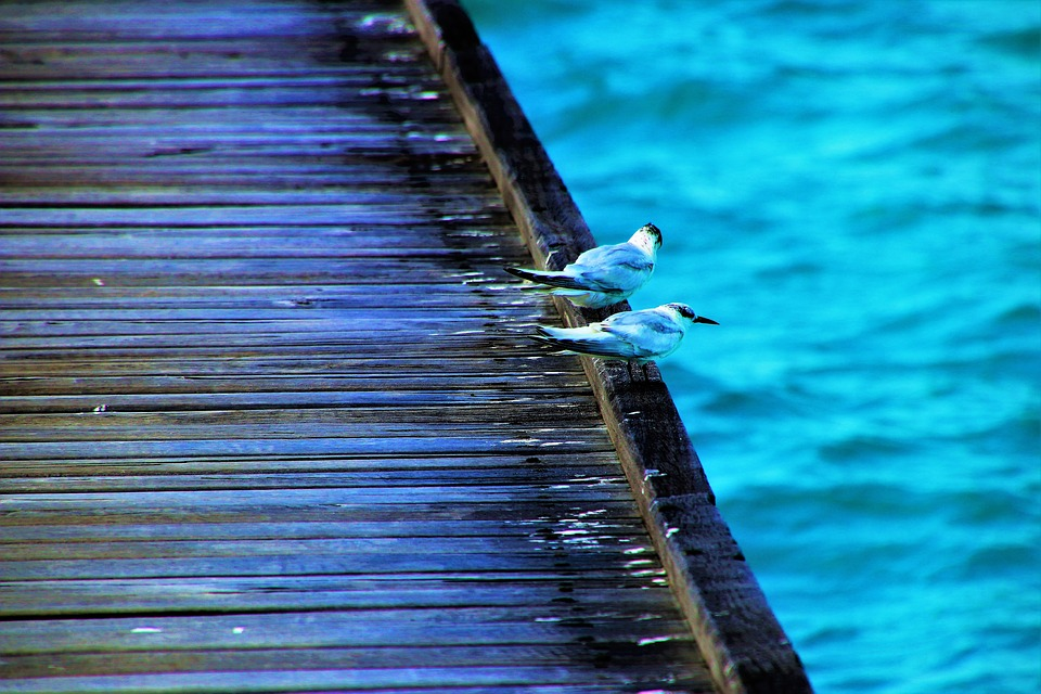 birds, water, the pier