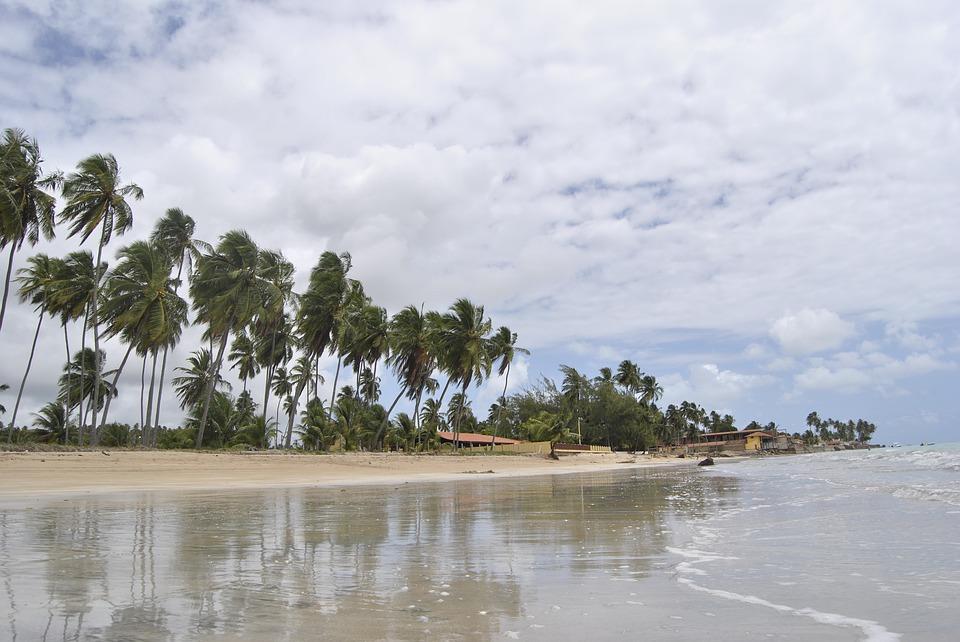 coconut tree, beach, coconut