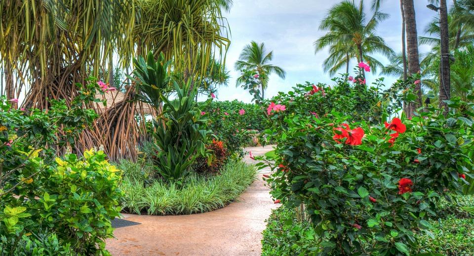 hawaii oahu ko olina marriott resort tropical flowers outdoor travel vacation summer ocean sky holiday tourism colorful garden path walkway hawaii hawaii hawaii hawaii hawaii oahu oahu oahu path