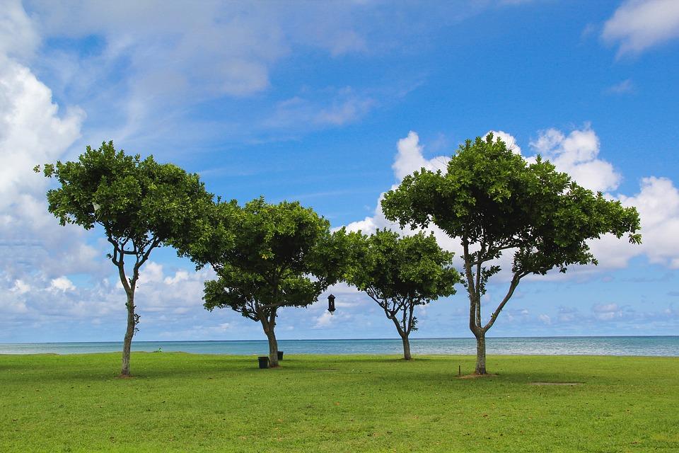 hawaii oahu trees beach ocean hawaiian travel vacation hawaii beach outdoor sea summer water sky blue nature outside hawaii hawaii hawaii hawaii hawaii outside outside