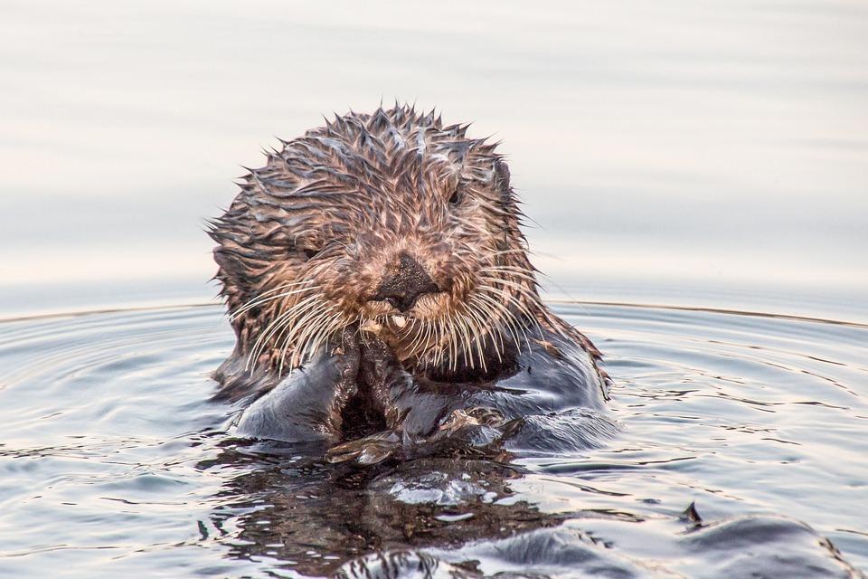 otter, seward, alaska