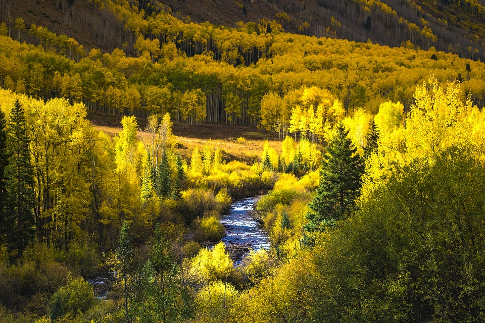 colorado fall leaves mountains fall autumn leaves nature aspen forest colorful tree leaf scenic yellow foliage landscape green golden park rocky season usa water stream color fog outdoors river travel reflection national scenery sun clouds panorama viewpoint spectacular panoramic america natural sky colorado colorado colorado colorado colorado aspen aspen aspen panoramic