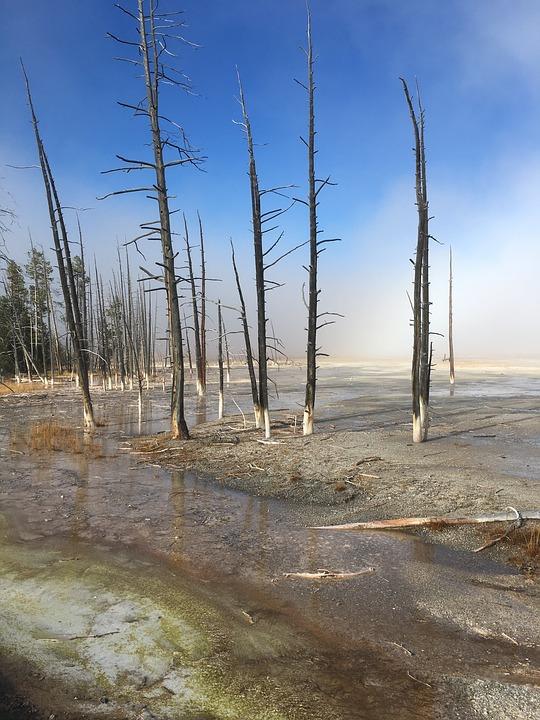 yellowstone, trees, national